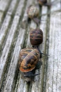 Snail_Race