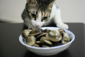 Hungry_Cat