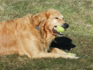 Tennis_Ball(DogsMouth)